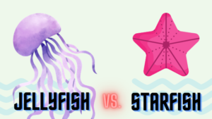 Difference Between Jellyfish and Starfish