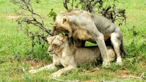 How Do Animals Know How To Mate? Their Mating Choice & Mating Types & More To Learn…