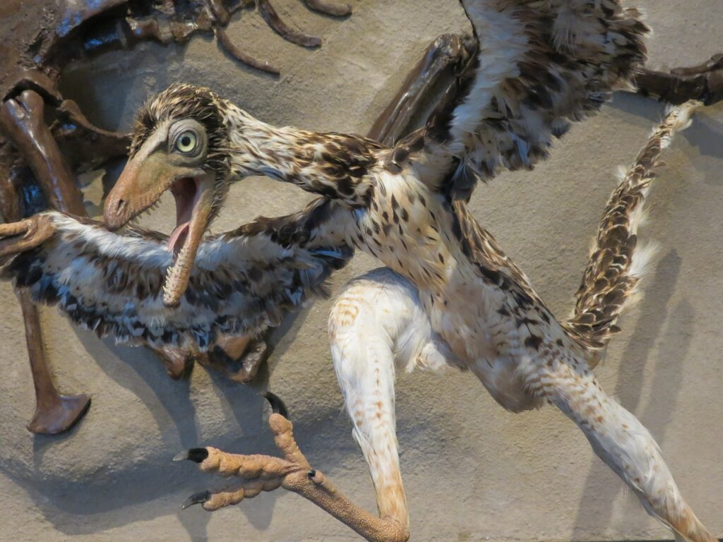 A non-living model of the extinct Archaeopteryx