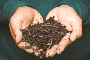 (7 Reasons To Know) – Why Earthworm Is Called Farmer's Friend? It's benefit in agriculture and more…