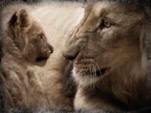 Why do lions kill their cubs? Why do lions not like cubs?
