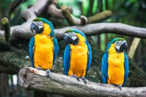 Do Parrots live in rainforests? Why do Parrots live in the rainforest? And More Things To Know