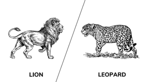 Lion vs. Leopard: What's The Difference? (Fight, Strength, Habitat, and More)