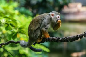List of 10 Spider Monkey Adaptations in the Tropical Rainforest. (Let's Know About It)
