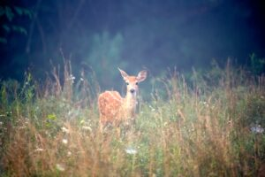 Do deer live in the rainforest? How do they survive?